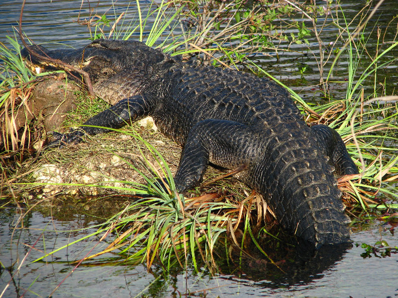 The Everglades National Park in Floridatravels