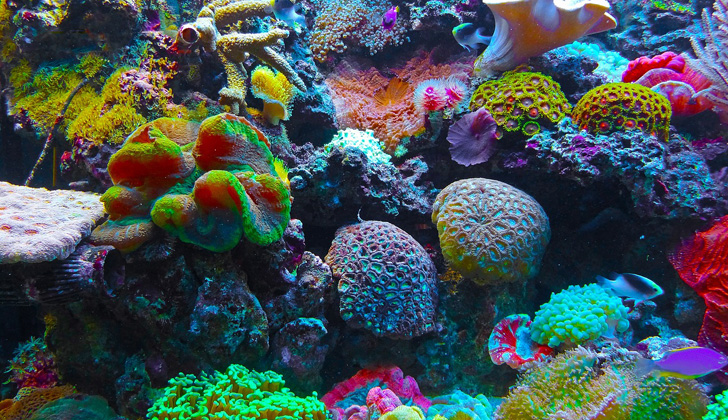 The Great Barrier Reef Coral in Australia 3