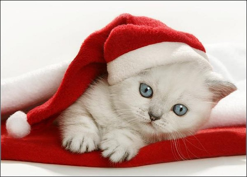 146903__christmas-kitten_p