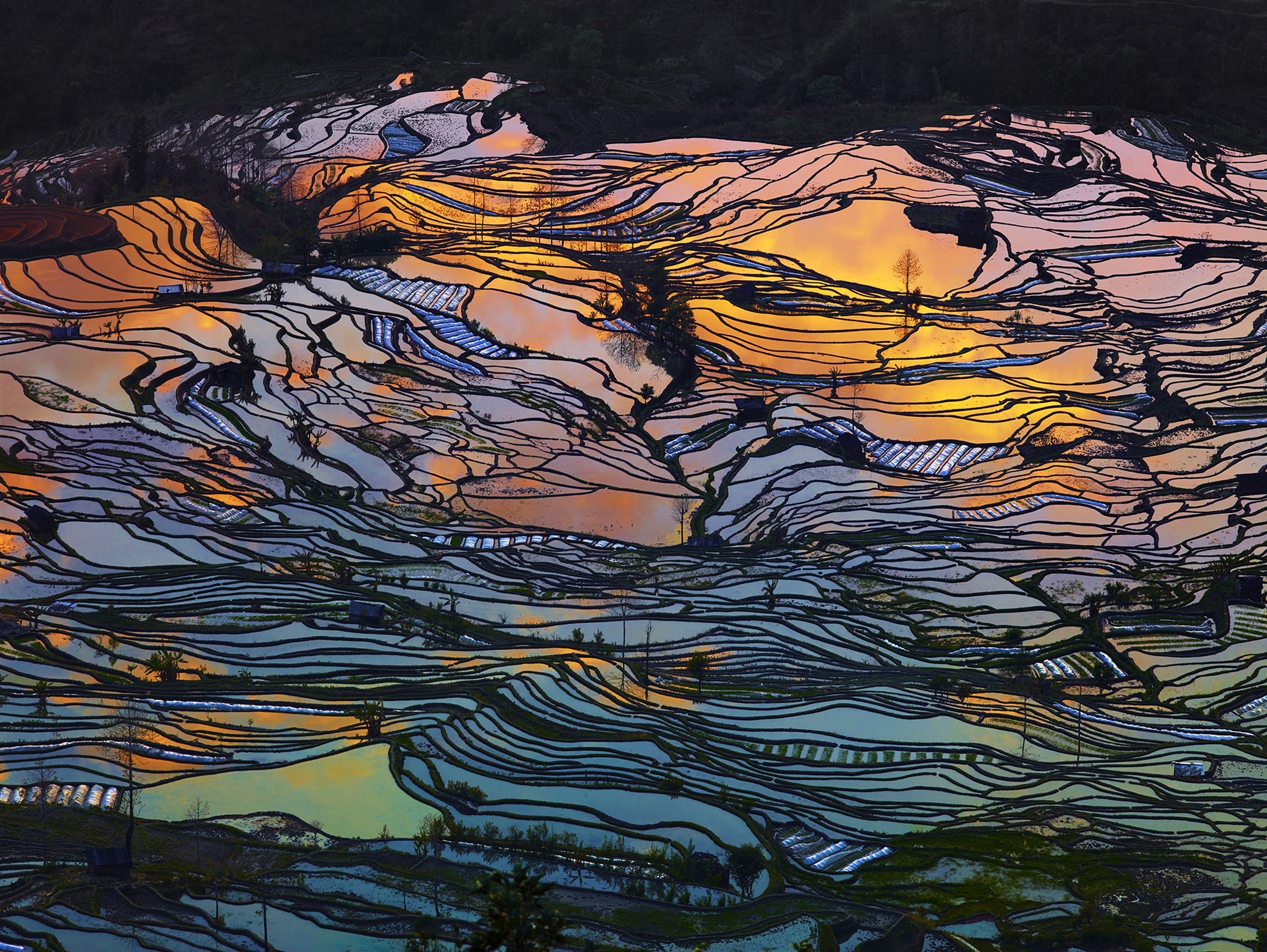 The rice terraces of Yuanyang