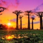 The Avenue of the Baobabs, the most photographed place in western Madagascar.