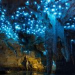 Waitomo Caves: a magical place illuminated by fireflies
